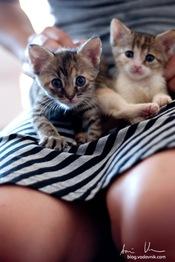 CatsRally_foto_AnzeVodovnik-100
