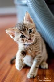 CatsRally_foto_AnzeVodovnik-27