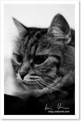 Meow-1_final